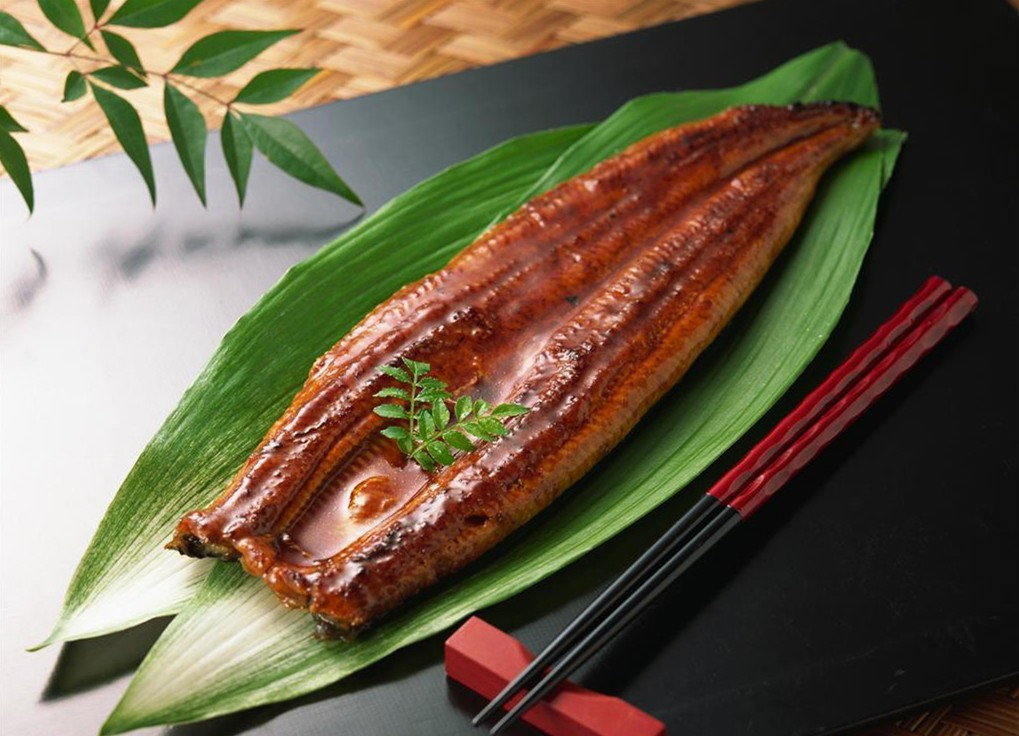How to distinguish between wild eels and Cultured eels